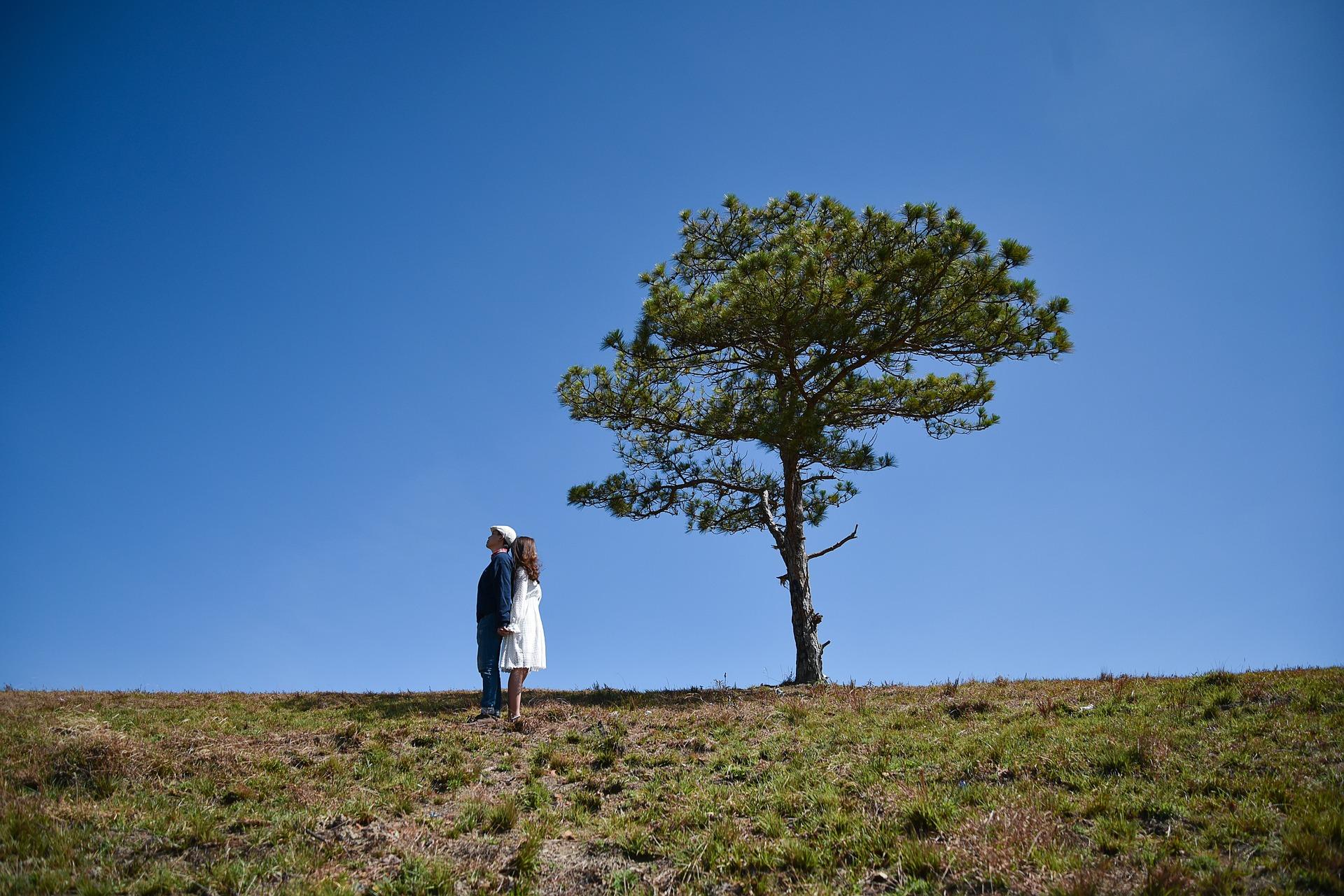 para, drzewo, ziemia, natura, niebo, kobieta, mężczyzna