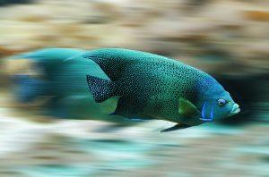 migracja, ryba, prędkość, woda, akwen