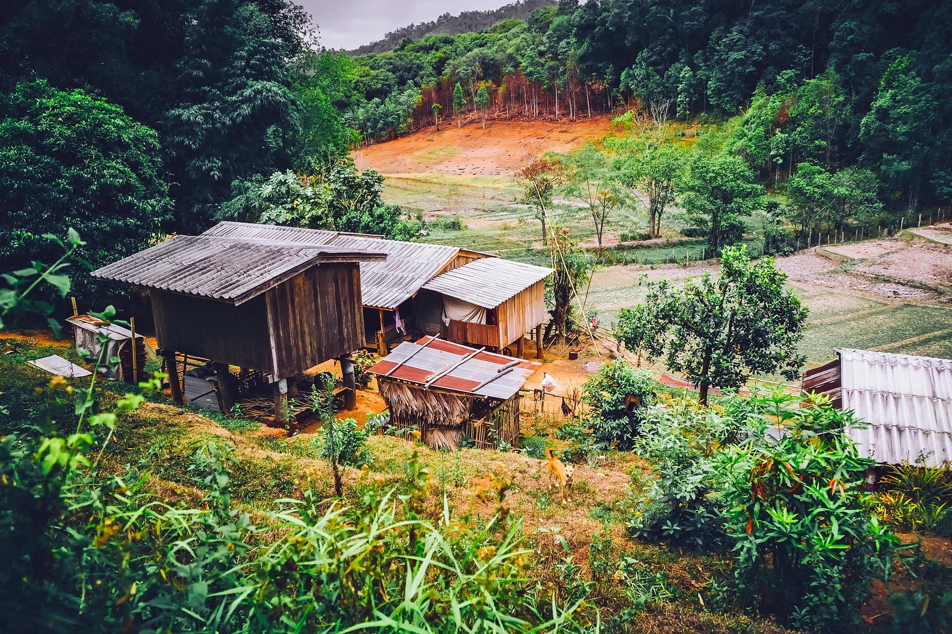 tropiki, lasy, domy, wycinka